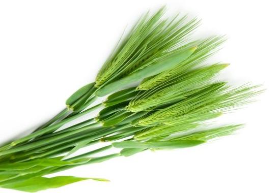 jećmenova-trava