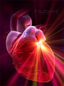 koenzim-q10-zdravo-delovanje-srca