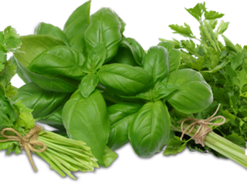 Kakovost zeliščnih prehranskih dopolnil za hujšanje