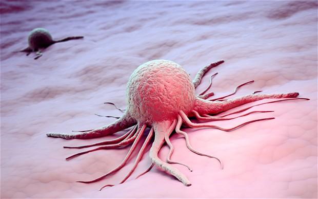 rakava-celica